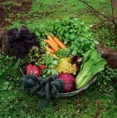vegetable_gardening_1_1