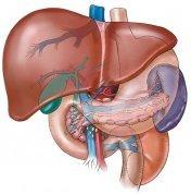 Liver_1